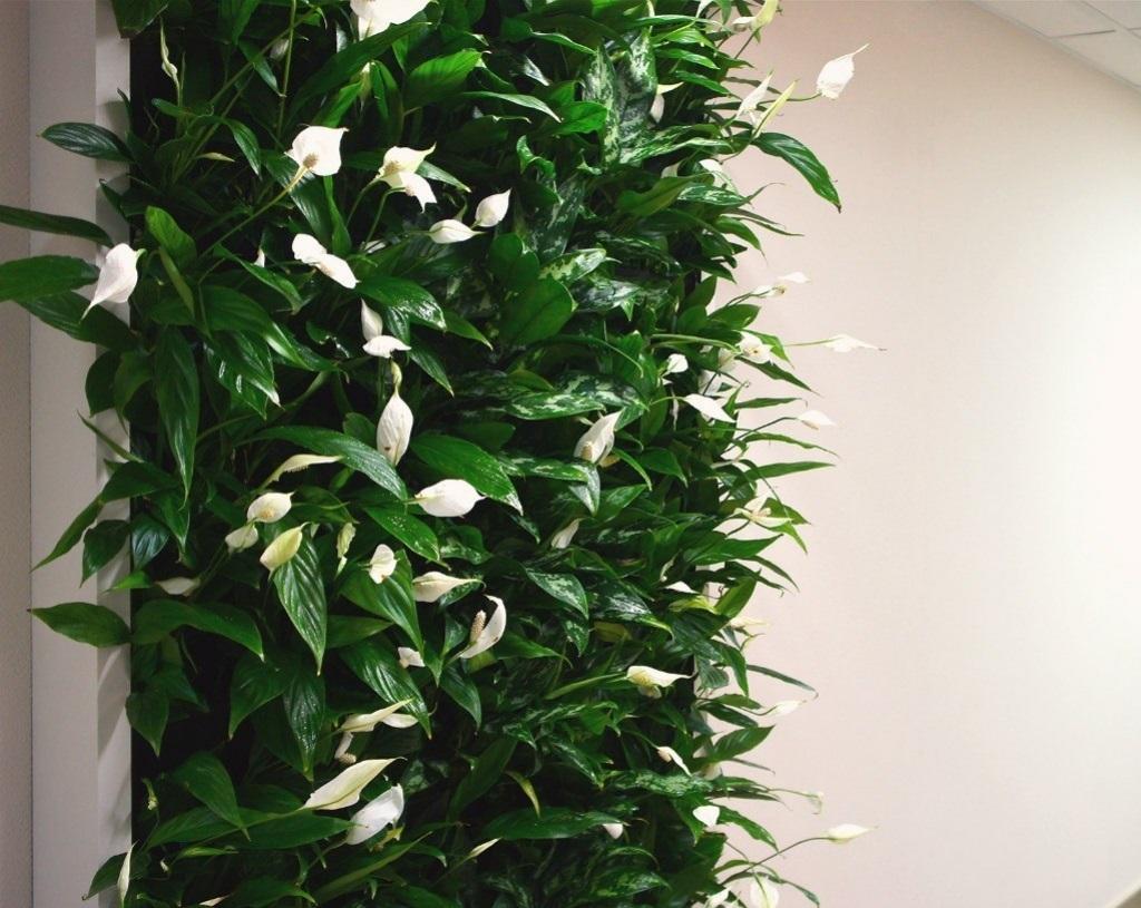 Озеленение офиса - фитостена