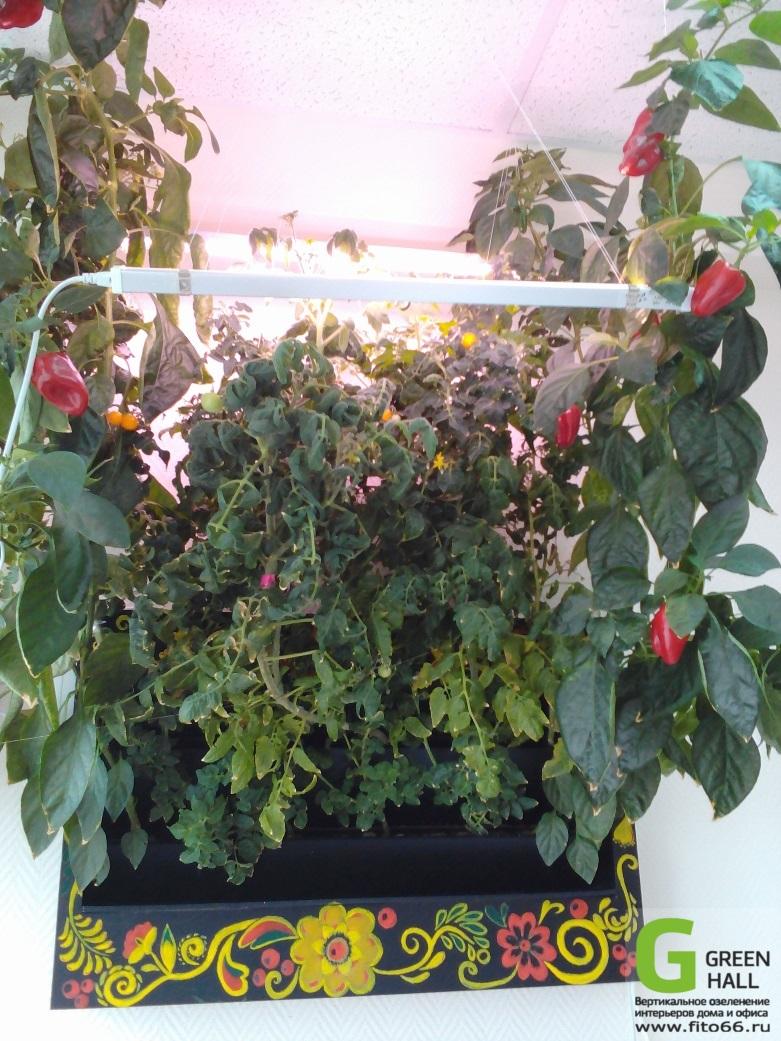 Выращивание овощей в фитостенке