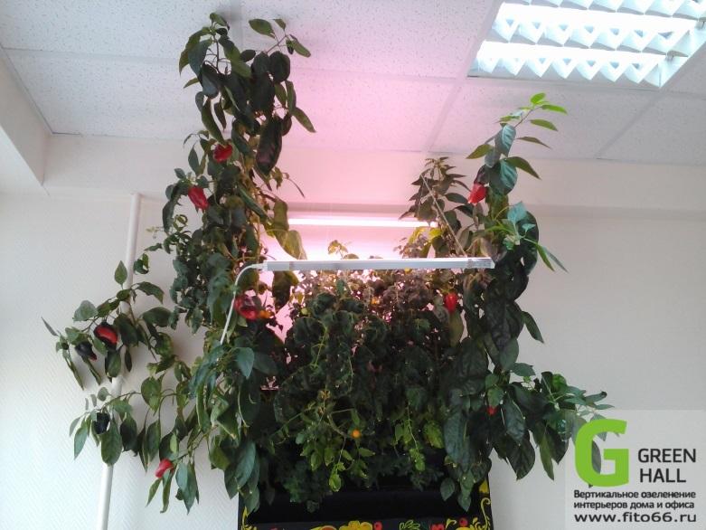 Фитостена для выращивания овощей