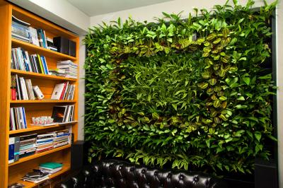 Зеленая стена (фитостена) из растений и фитомодули в Екатеринбурге Green Hall