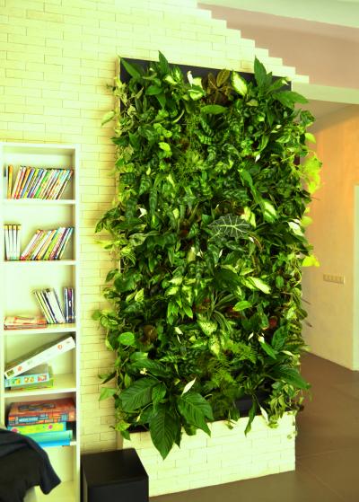 Живая стена из растений своими руками фото