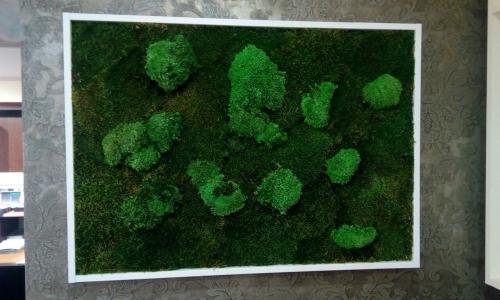 Картина в багете из стабилизированного мха