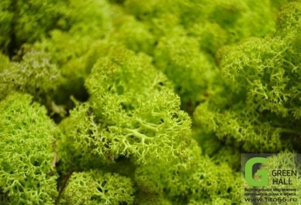 Ягель мох