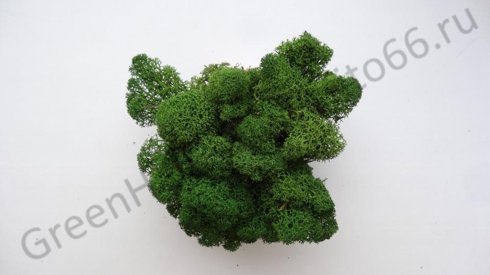 Пучок мха ягеля зеленый
